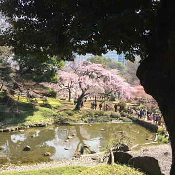 桜が映える